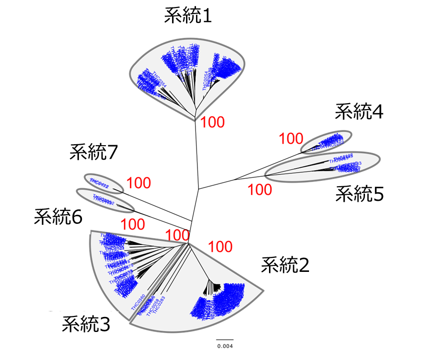 【古代】縄文時代の終盤に人口急減、ゲノムで裏付け 現代人のY染色体解析で 東大研究